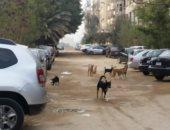 كلاب ضالة-ارشيفية