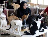 سيدة إماراتية تحول منزلها إلى مأوى للقطط