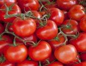 محصول الطماطم -  ارشيفية