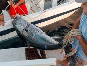 صيد الأسماك - ارشيفية