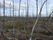 احتراق الغابات - أرشيفية