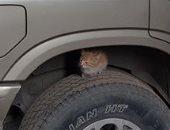 القطة تحتمى من البرد