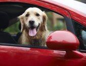 نصائح لإصطحاب الكلب أثناء السفر-أرشيفية