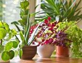 فوائد زراعة النباتات فى المنزل-أرشيفية