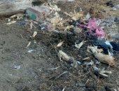 غرق شوارع قرية كفر الجنينة بالمحلة بالصرف الصحى