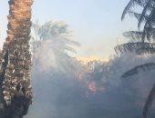 حريق هائل فى مزارع نخيل بالوادى الجديد