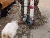 """صور لـ""""دراى فود وماء"""" لقطط الشوارع على السوشيال ميديا"""
