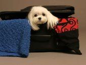 نصائح لاصطحاب الكلب أثناء السفر