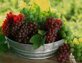 العنب - ارشيفية