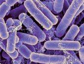 البكتيريا العنقودية