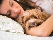 النوم بجانب حيوان أليف-أرشيفية