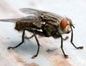 ذبابة - صورة أرشيفية