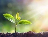 نبات - أرشيفية