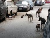 انتشار الكلاب الضالة