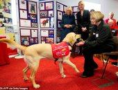 تدريب الكلاب للكشف عن فروس كورونا