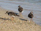 الطيور البحرية تنتشر على شواطئ البحر الأحمر