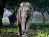 فيل -ارشيفيه