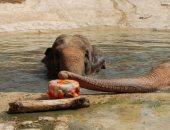 الحيوانات تحارب الحر بالفواكهة المثلجة