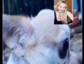 مادونا فى مكالمة فيديو مع كلبها كوكو