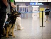 كلاب تكشف المصابين بكورونا فى فنلندا