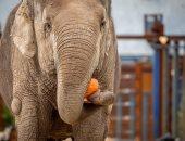 الأفيال تحتفل بالهالوين