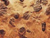 احفورة ـ صورة أرشيفية