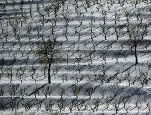الثلج يكسو الحقول فى لبنان