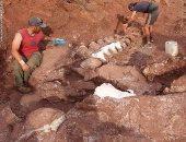 العثور على بقايا أضخم ديناصورات العالم