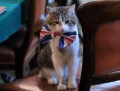 القط لارى يرتدى ربطة عنق بألوان علم بريطانيا