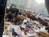 القمامة والماشية فى شارع أحمد عرابى