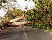 عاصفة ترابية قوية بالأقصر تتسبب فى سقوط شجرة ضخمة