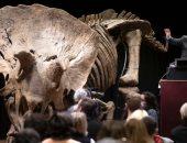 هيكل عظمى لديناصور ترايسيراتوبس