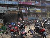 فيل يقتحم قرية فى الهند
