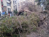 سقوط شجرة ضخمة بالمهندسين
