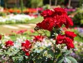 زهور الربيع _ صورة أرشيفية