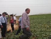 الدكتور صلاح هلال وزير الزراعة واستصلاح الأراضى