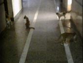 قطط- أرشيفية
