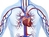 القلب البشرى