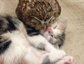 قطة وبومة