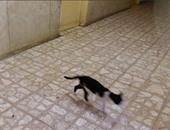 القطط تتجول بالمستشفى