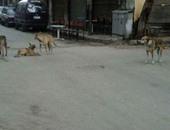 الكلاب الضالة بالمنطقة