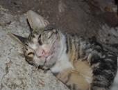 قطة ميتة / أرشيفية
