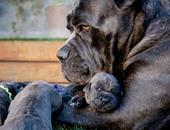 أمومة الكلاب