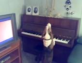 الكلب أثناء عزفه على البيانو