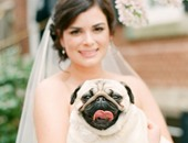 أماندا تيبتون مع كلبها الوفى