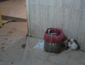 قطة من بين القطط بمستشفى دسوق العام