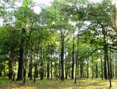 أشجار - أرشيفية