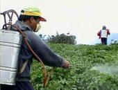 استخدام المبيدات الحشرية