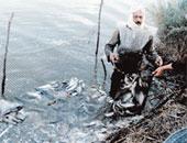 إزالة المزارع السمكية - أرشيفية