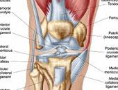 فقدان الوزن ضرورى لسلامة مفصل الركبة